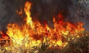 Συναγερμός στην Πυροσβεστική για μεγάλη φωτιά σε πευκοδάσος στην Κόνιτσα