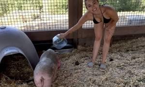 Miley Cyrus: Ταΐζει το γουρούνι της με το μπικίνι