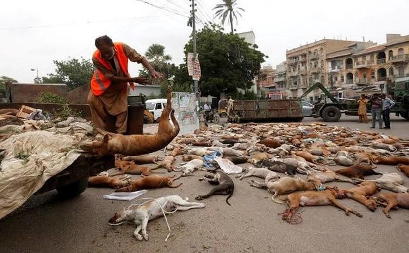Κτηνωδία στο Πακινστάν: Οι Αρχές δηλητηρίασαν εκατοντάδες αδέσποτα σκυλιά (ΣΚΛΗΡΕΣ ΕΙΚΟΝΕΣ)