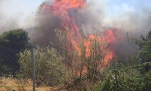 Συναγερμός στην Πυροσβεστική για πυρκαγιές σε Ναύπλιο και Παγγαίο
