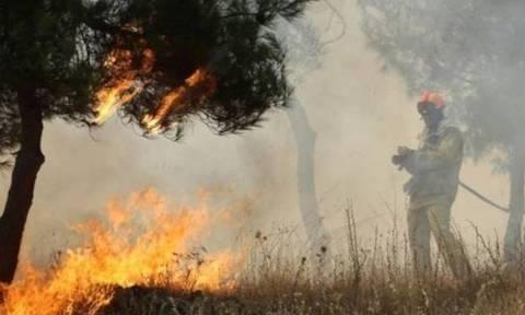 Υπό μερικό έλεγχο η φωτιά στα Λευκάκια Ναυπλίου