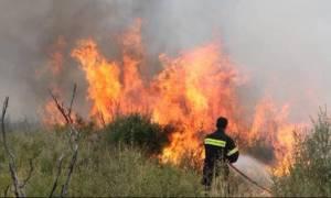 Φωτιά Εύβοια: Υπό μερικό έλεγχο η φωτιά στην Κύμη, σε ύφεση το μέτωπο στην Κάρυστο