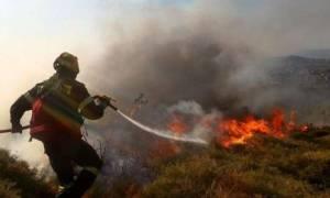 Αχαϊα: Φωτιά στην Άνω Ποταμιά Ακράτας