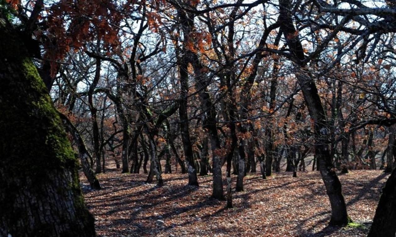 Πυρκαγιά κατακαίει δάσος με βελανιδιές στο Μεσολόγγι
