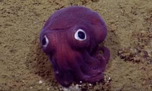 Τι είναι μοβ, με πεταχτά μάτια και ζει στο βυθό της θάλασσας; (video)