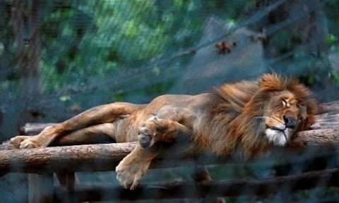 Εξαθλίωση στη Βενεζουέλα: Πεινασμένοι κάτοικοι τρώνε ζώα από ζωολογικούς κήπους (vid)