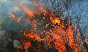 Δασική πυρκαγιά στο Ρηγαίο Λάρισας