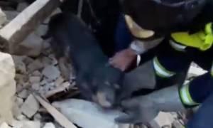 Σεισμός Ιταλία: Δραματική διάσωση σκύλου κάτω από τα ερείπια (vid)