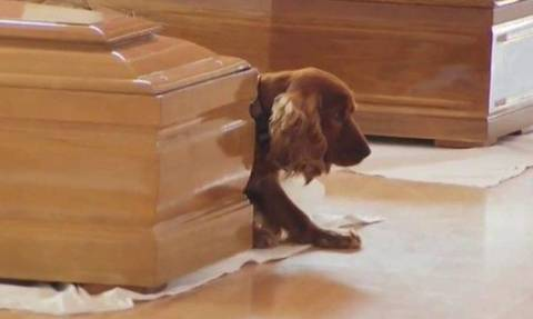 Σεισμός Ιταλία - Αφοσιωμένος ως το θάνατο: Σκύλος «φυλάει» το φέρετρο του ιδιοκτήτη του