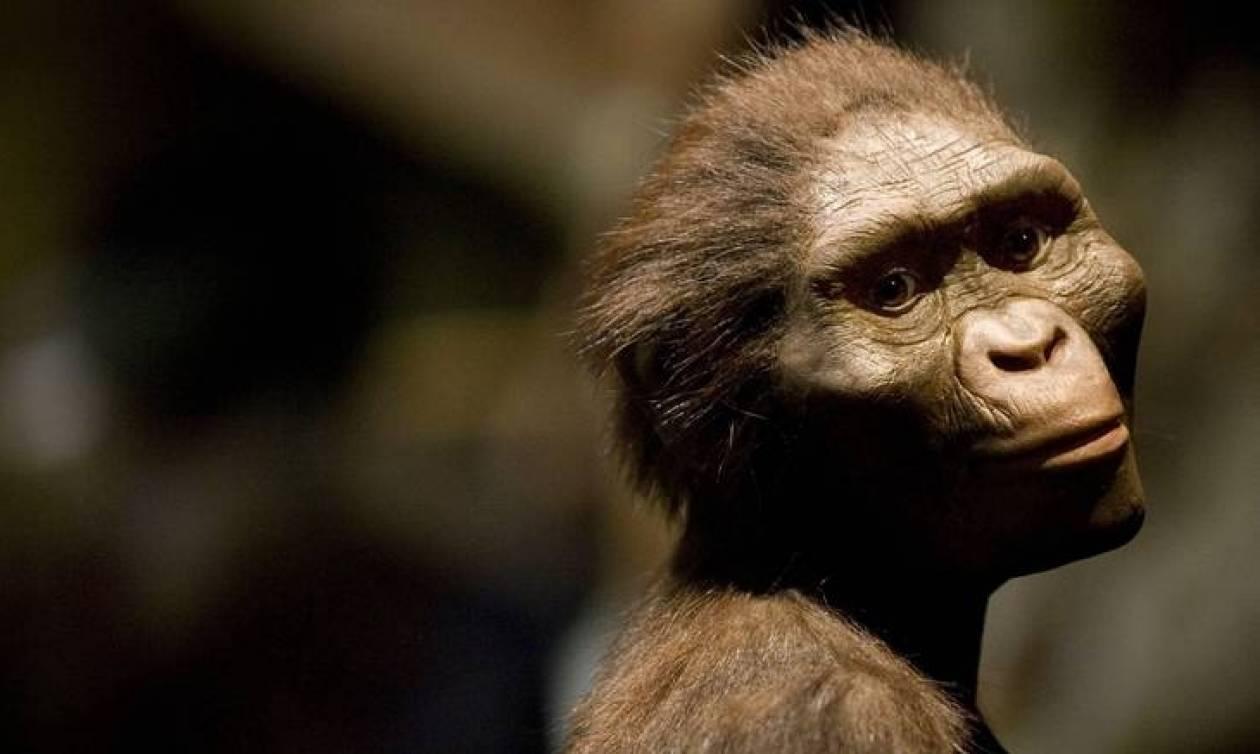 Έτσι σκοτώθηκε η Λούσι, η διασημότερη αυστραλοπίθηκος του πλανήτη (Vids)