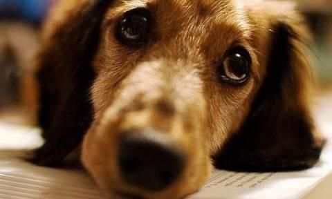 Αιτωλικό: 28χρονος πυροβόλησε και σκότωσε σκύλο