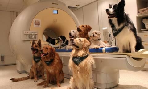 Δόθηκε η απάντηση: Τελικά οι σκύλοι καταλαβαίνουν τι τους λέμε;