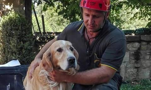 Ιταλία: Σκύλος εντοπίστηκε ζωντανός 9 μέρες μετά τον σεισμό! (vid)