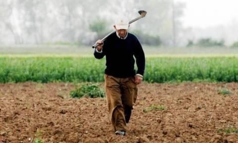 Αυτή είναι η καλλιέργεια που προσφέρει έως 12.000 ευρώ το στρέμμα!