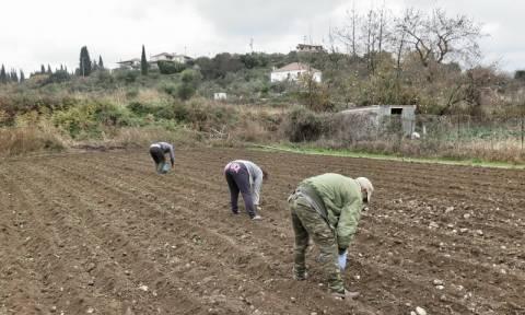 Νέο πρόγραμμα: Επιδότηση έως 100.000 ευρώ το χρόνο σε «ομάδες» αγροτών