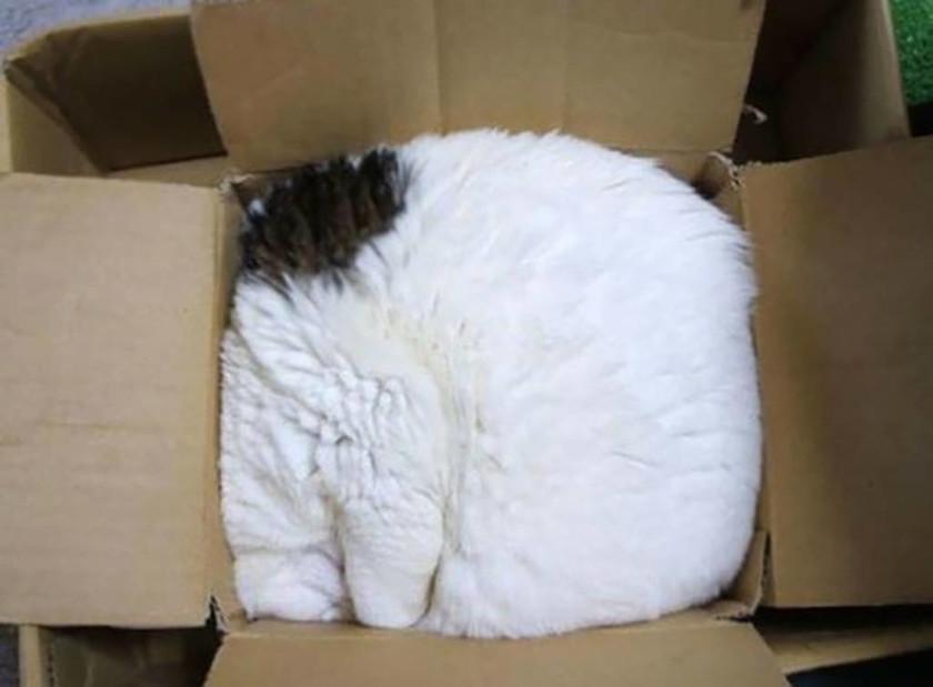 Σαράντα απίστευτες φωτογραφίες που αποδεικνύουν ότι οι γάτες μπορούν να κοιμηθούν οπουδήποτε