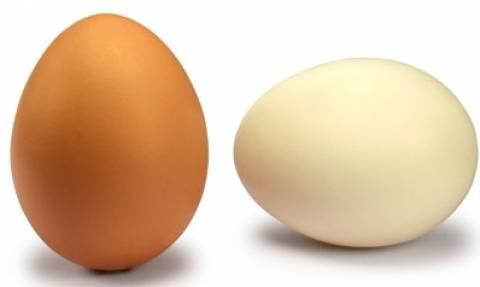 Τι καθορίζει το χρώμα των αυγών ;