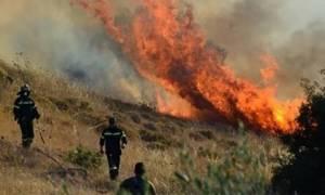 На Кипре пожарные взяли под контроль ситуацию с лесным пожаром