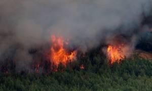 Μεγάλη φωτιά μαίνεται στην Οινόη Αττικής