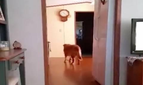 Τραβούσε βίντεο το νέο της κατοικίδιο. Αυτό που εμφανίστηκε δίπλα του της έκοψε την ανάσα (video)