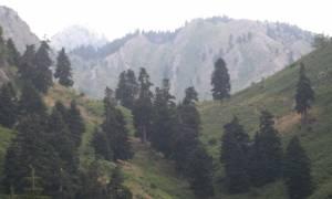 Τι είδαν οι κάτοικοι στα ορεινά χωριά των Τρικάλων και «πάγωσαν»;