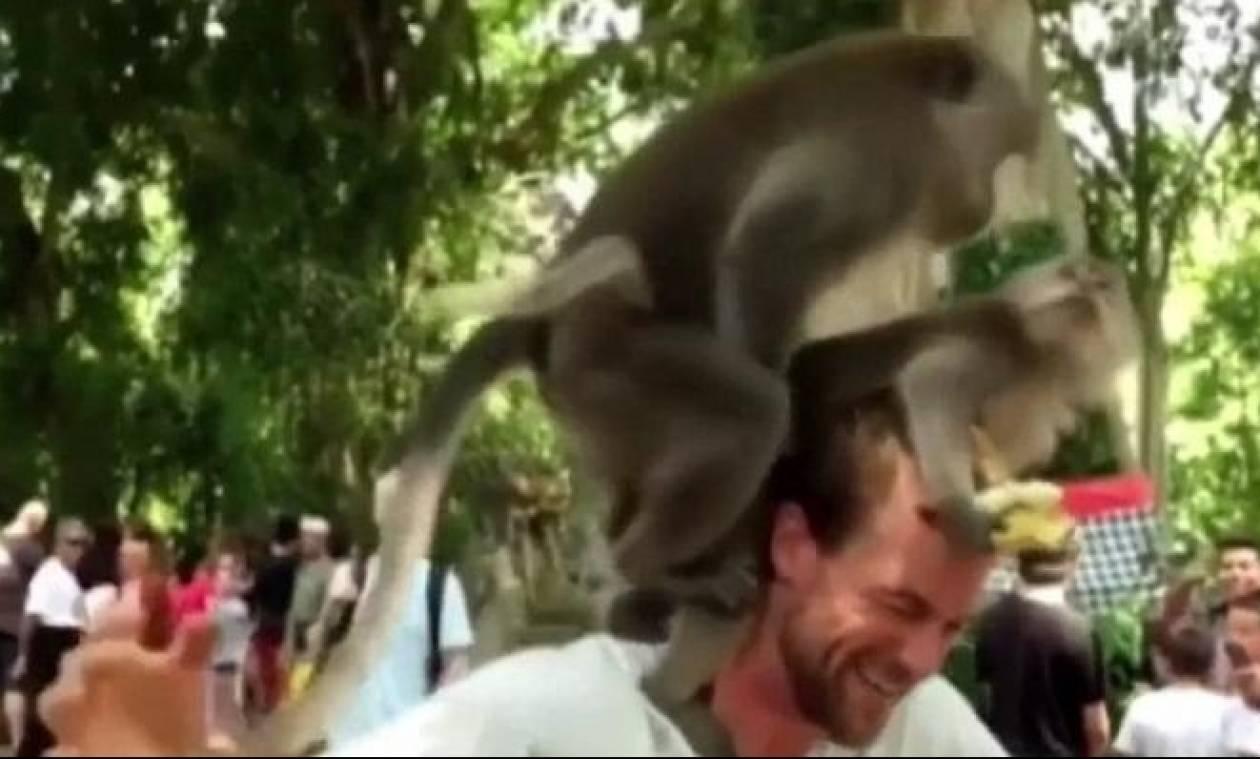Μαϊμούδες το... κάνουν πάνω στο κεφάλι επισκέπτη ζωολογικού πάρκου (video)