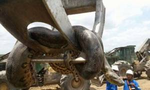 ΣΟΚ – Ανακόντα «τέρας» ανακαλύφθηκε στη Βραζιλία