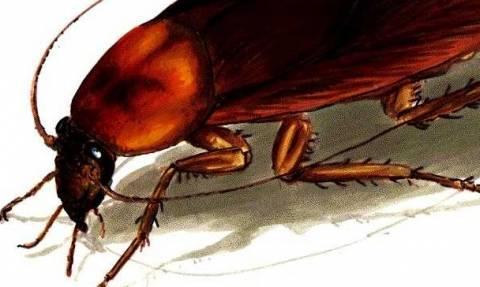 Σοκ: Δέκα παράξενα πράγματα που δεν γνωρίζατε για τις κατσαρίδες