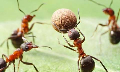 Αυτό είναι το απόλυτο κόλπο για να εξαφανίσετε τα μυρμήγκια από το σπίτι