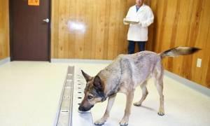 Τελικά ισχύει! Οι σκύλοι όντως μυρίζουν τον καρκίνο στους ανθρώπους (video)