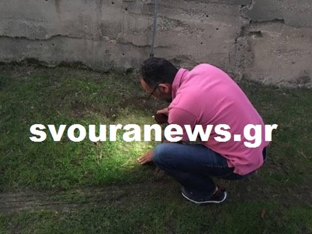 Kαστοριά: Στο τσακ γλίτωσε από τα… δόντια του λύκου