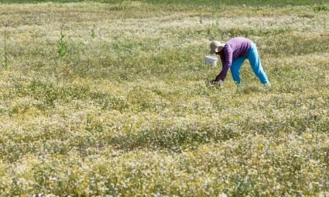 Πότε θα πάρουν τις επιστροφές ΦΠΑ και ΕΦΚ οι αγρότες
