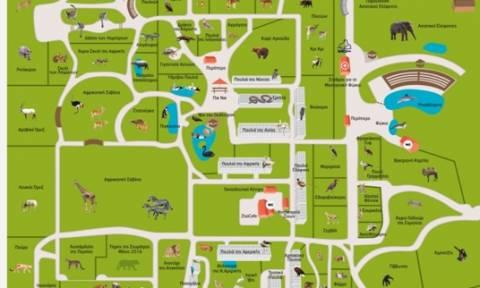 Quiz: Πόσο καλά γνωρίζεις το Αττικό Πάρκο;