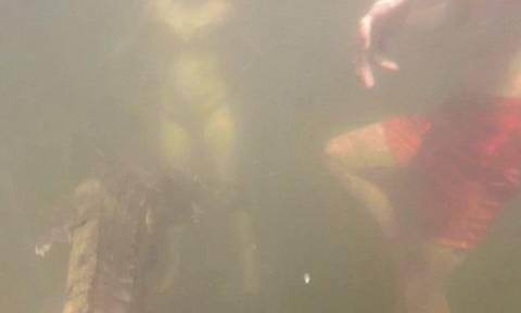 Βίντεο σοκ: Κροκόδειλος κολυμπά δίπλα σε παιδάκι λίγο πριν του επιτεθεί