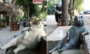 Viral: Η πιο διάσημη γάτα της Κωνσταντινούπολης τιμήθηκε με άγαλμα στο αγαπημένο της σημείο (Pics)