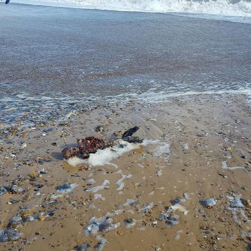 Μυστήριο με σώμα «νεκρής γοργόνας» που ξέβρασε η θάλασσα (ΠΡΟΣΟΧΗ! ΣΚΛΗΡΕΣ ΕΙΚΟΝΕΣ!)