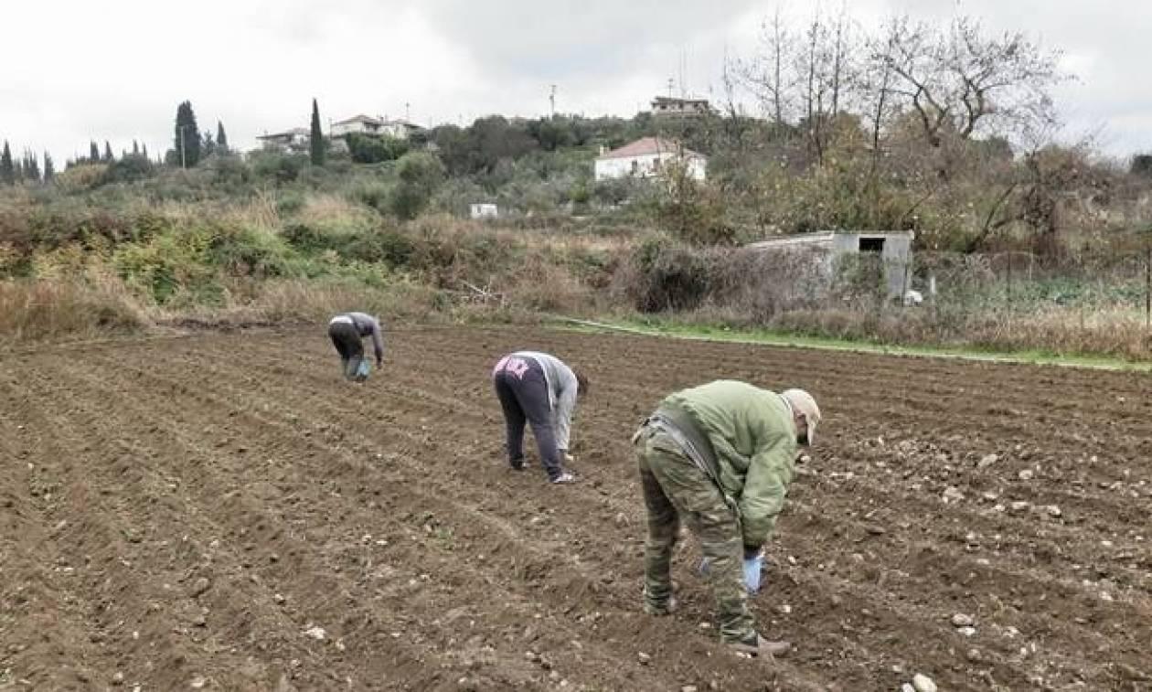 ΕΛΓΑ: Αποζημιώσεις 1,2 εκατ. ευρώ σε αγρότες