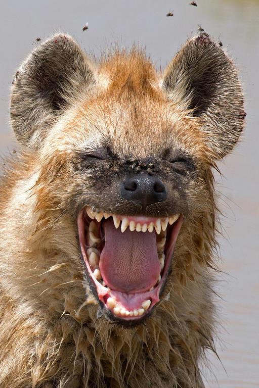 Όταν η φύση έχει κέφια: Αυτές είναι οι πιο ξεκαρδιστικές φωτογραφίες των βραβείων Comedy Wildlife
