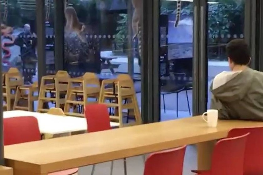 Τρόμος στο Λονδίνο: Απέδρασε γορίλας από το ζωολογικό κήπο (pics+vid)