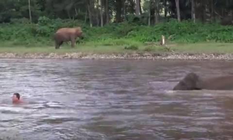 Απίστευτο βίντεο: Ελέφαντας βουτάει με αυτοθυσία στο νερό για να σώσει άνδρα από «πνιγμό»