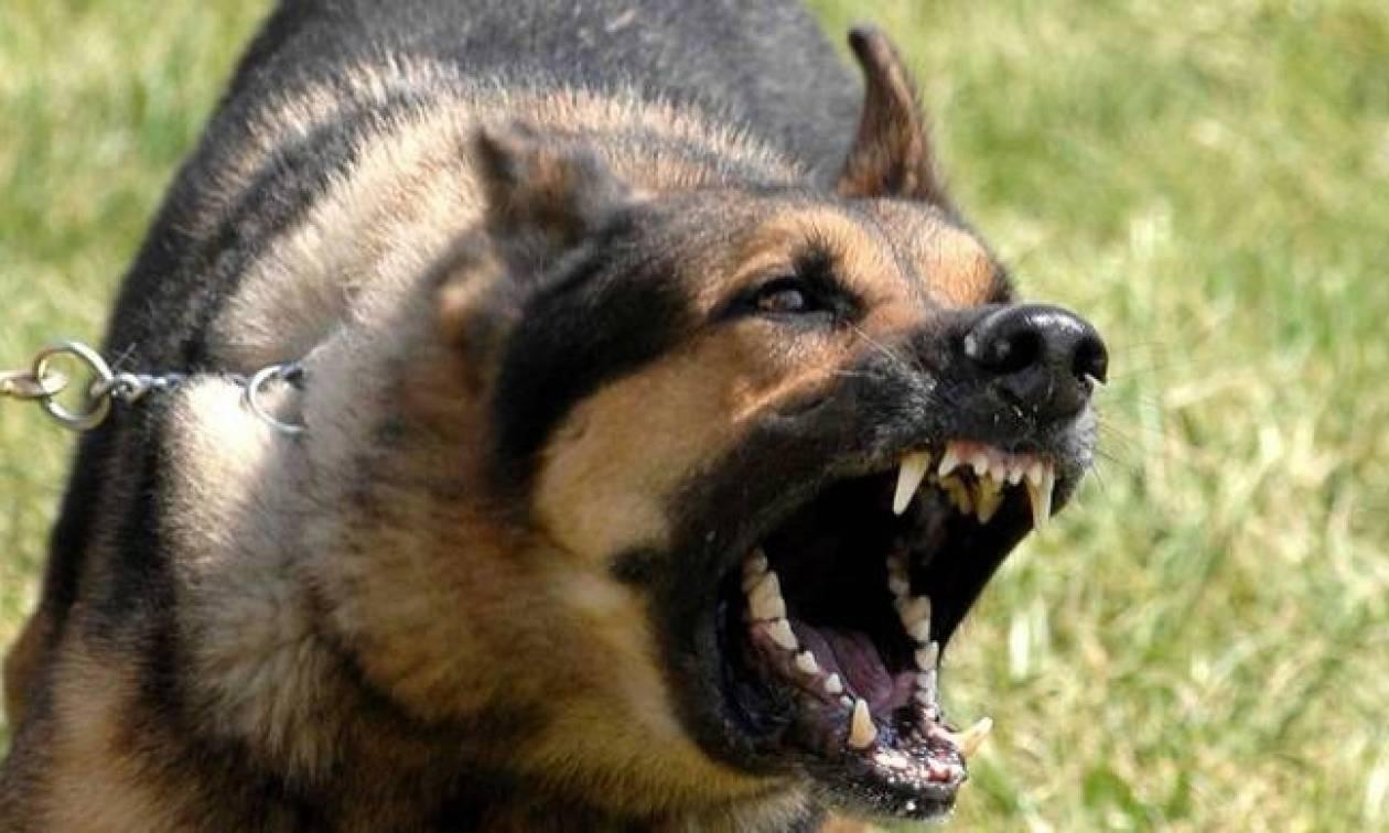 Σοκ: Σκύλος δάγκωσε στο κεφάλι μαθήτρια στην Κρήτη