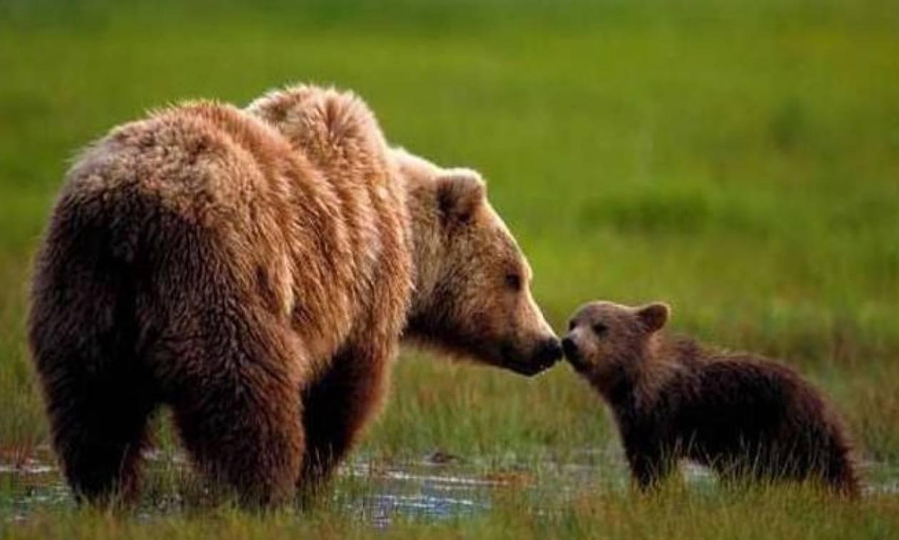 Σοκ στην Ξάνθη από επίθεση αρκούδας σε άνδρα