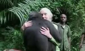 Απελευθερώνουν έναν χιμπατζή στη ζούγκλα - Αυτό που έκανε πριν φύγει θα σας συγκινήσει (video)