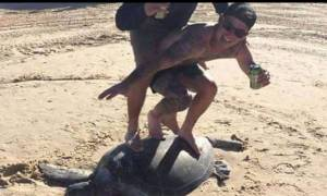 Πρόστιμο «μαμούθ» σε δύο σέρφερ που μετέτρεψαν μια χελώνα σε σανίδα (pic)