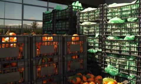 Δήμος Ν. Ιωνίας: Διανομή προϊόντων χωρίς μεσάζοντες