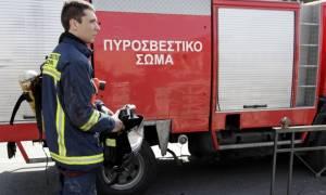 Χαλκιδική: Κινητοποίηση της Πυροσβεστικής για ένα… ιγκουάνα!