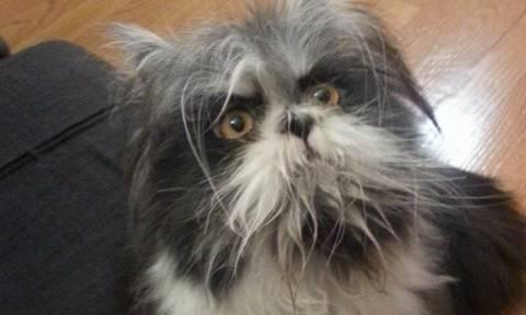 Το ζώο που δίχασε τους χρήστες του Internet - Είναι σκύλος ή γάτα;