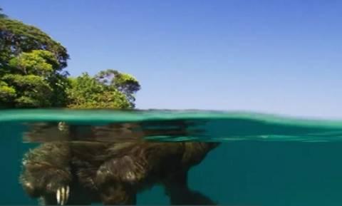 Απίθανο ντοκιμαντέρ του BBC με ζευγάρωμα σπάνιου ζώου ρίχνει το Facebook (video)