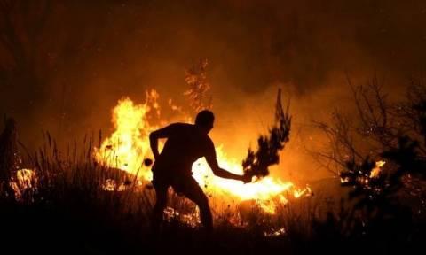 Θλιβερός απολογισμός 2016: Περισσότερες πυρκαγιές, υπερδιπλάσιες καμένες εκτάσεις