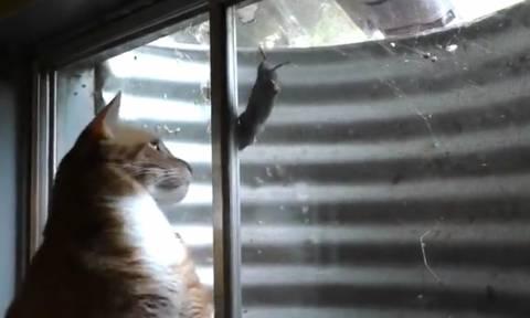 Το απίθανο παιχνίδι μιας γάτας με ένα ποντίκι που δεν θα πιάσει ποτέ (video)